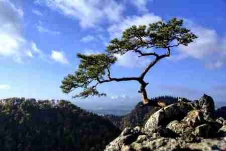 tree on mountain top - writing a book