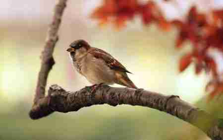 sparrow on a branch - how to find your voice